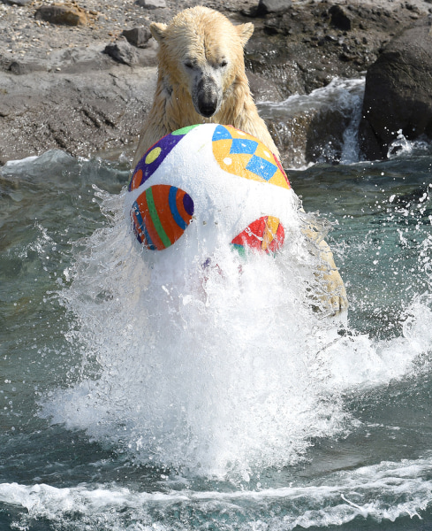 Image: A polar bear swims with an Easter treat