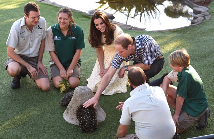 Britain's Prince William (top 2nd R) and his wife Catherine, the Duchess of Cambridge (C), pat two echidnas after watching a bird and Australian nativ...