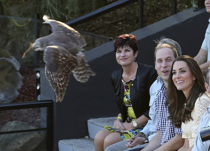 Britain's Prince William and his wife Kate, the Duchess of Cambridge, right, watch as a Barking Owl fly by during a wildlife show during a visit to Ta...