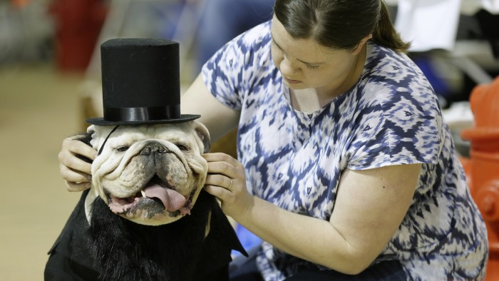 Colleen Kelley, of Iowa City, Iowa, fixes the hat on her dog Bruce during judging at the 35th annual Drake Relays Beautiful Bulldog Contest, Monday, A...