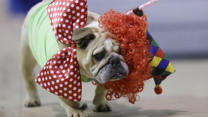 Jasmine Josephine loses her wig as she walks across stage during judging at the 35th annual Drake Relays Beautiful Bulldog Contest, Monday, April 21, ...