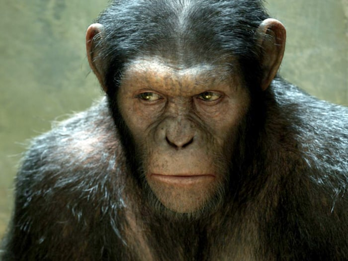 IMAGE: Rise of the Planet of the Apes
