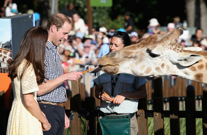 Will and Kate feed giraffes at Taronga Zoo on April 20 in Sydney. Australia and New Zealand are hoping tourists will book trips to take the same path.