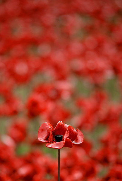 LONDON, UNITED KINGDOM - AUGUST 05:  A ceramic poppy is on display with others at The Tower of London's 'Blood Swept Lands and Seas of Red' ceramic po...