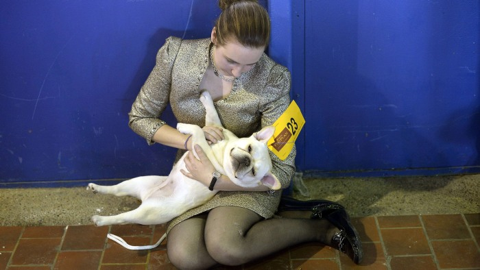 Amanda Mcallister and Laurel the French Bulldog play in the benching area at Pier 92 and 94 in New York City  for the first day of competition at the ...