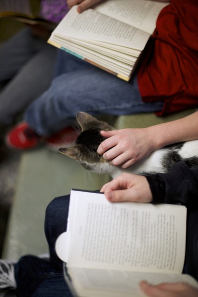 "Seth Wiggins and Ethan Wiggins read to ""Tyler,"" a cat up for adoption, as part of ""The Book Buddies Program"" at the Animal Rescue League of Berks Coun..."
