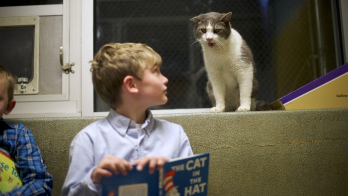 Samuel Trego, left, and Ben Spiri read to Stewart, a cat up for adoption, during the Book Buddies program at the Animal Rescue League of Berks County in Birdsboro, Pa., on Feb. 11.