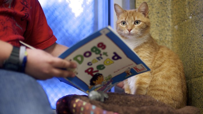 "Desmond Allen reads to ""Ginger,"" a cat up for adoption, during ""The Book Buddies Program"" at the Animal Rescue League of Berks County in Birdsboro, Pe..."
