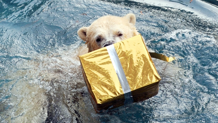 A polar bear opens a package filled with food and wrapped as a Christmas gift at the zoo in La Fleche, western France, on December 23, 2013.  AFP PHOT...