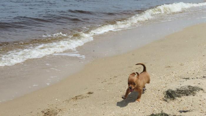 Frank runs along the beach
