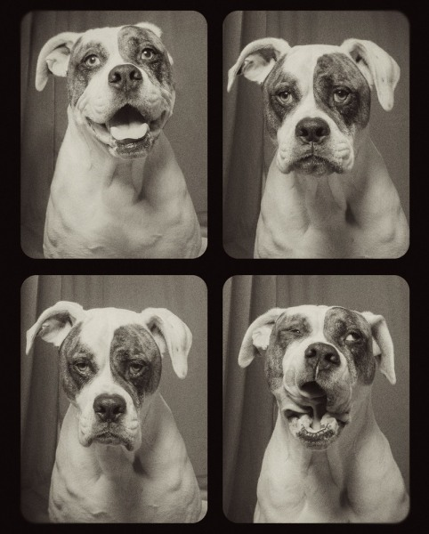 dogs in a photobooth