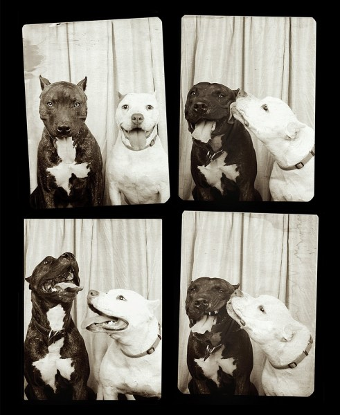 Dogs in a photo booth.