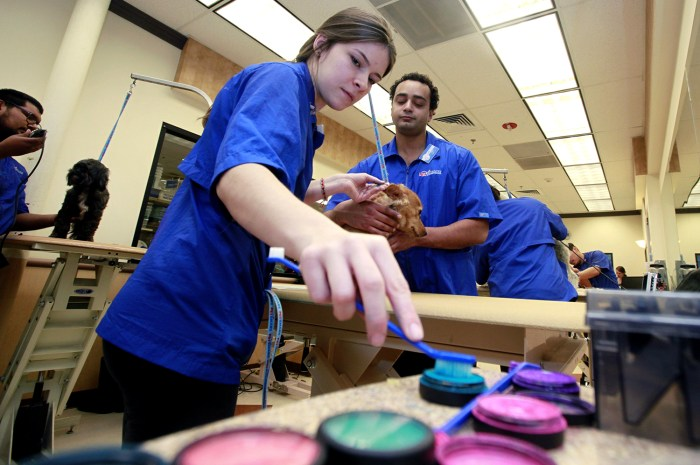 In this Friday, Dec. 13, 2013 photo, PetSmart groomer, Michelle Boch, assisted by salon manager, Joel Mitchell, adds color during a chalking treatment...