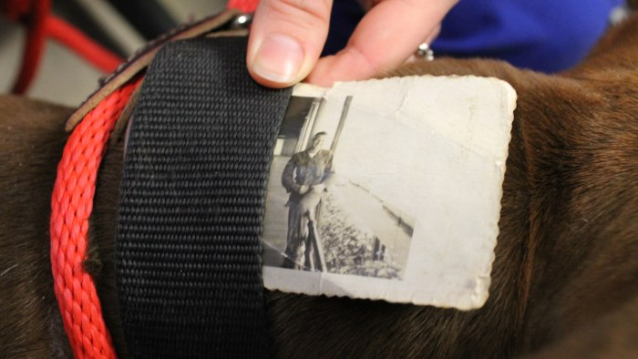 Two-year-old Soldier was found by animal control earlier this month with a tattered photo tucked within his collar.