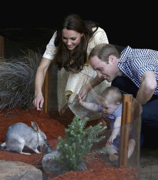 Prince George and bilby