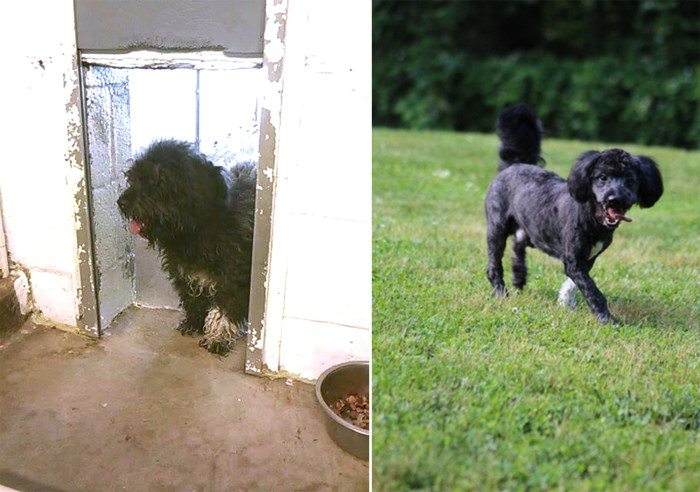 Before and after photos of Wilson the dog
