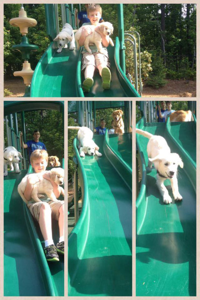 Puppies go down a slide with Lionheart students.