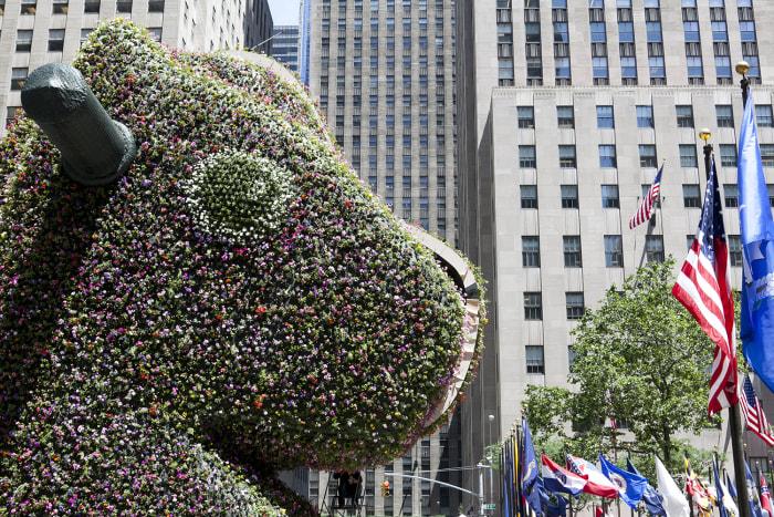 "TODAY Show: Artist Jeff Koons' latest installation ""Split-Rocker"" begins to grow in the plaza outside of Rockefeller Center."