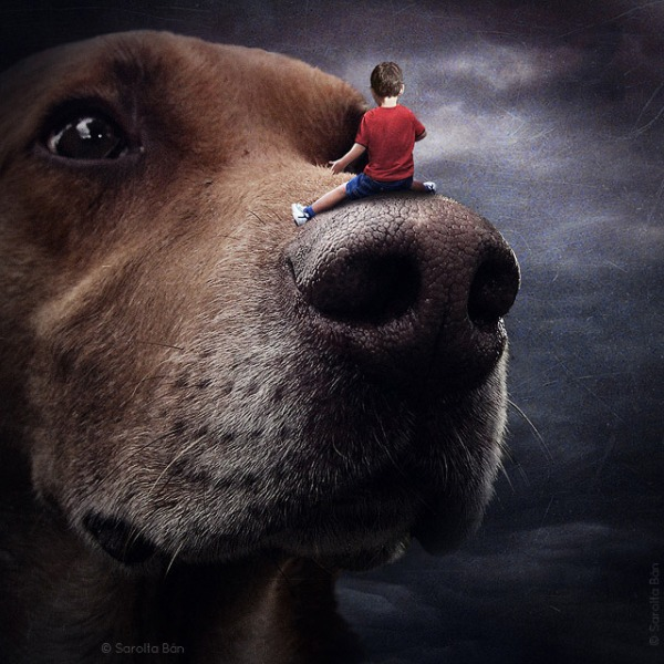 A child takes a ride on a huge, cuddly dog in this image that plays with scale.