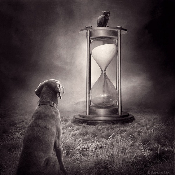 A shelter cat and dog ponder the passing of time in this image.