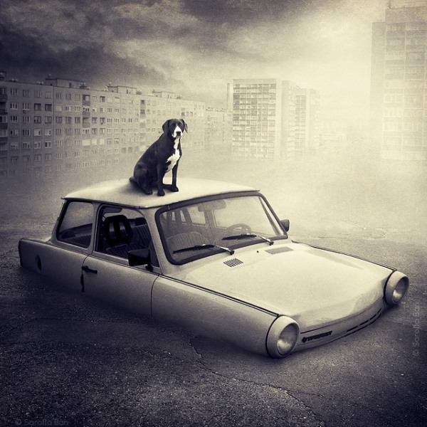 A shelter dog is a sweet sign of life atop an abandoned car in this barren landscape.