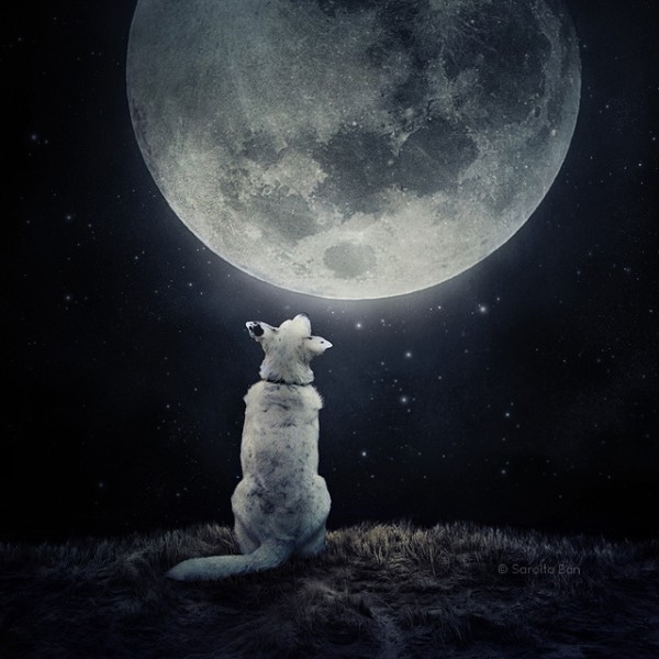 "The photographer cites this image of a dog basking in moon glow as her personal favorite of all time, ""because my sister will soon give birth to her first child and they have this picture in their bedroom,"" she told TODAY.com."