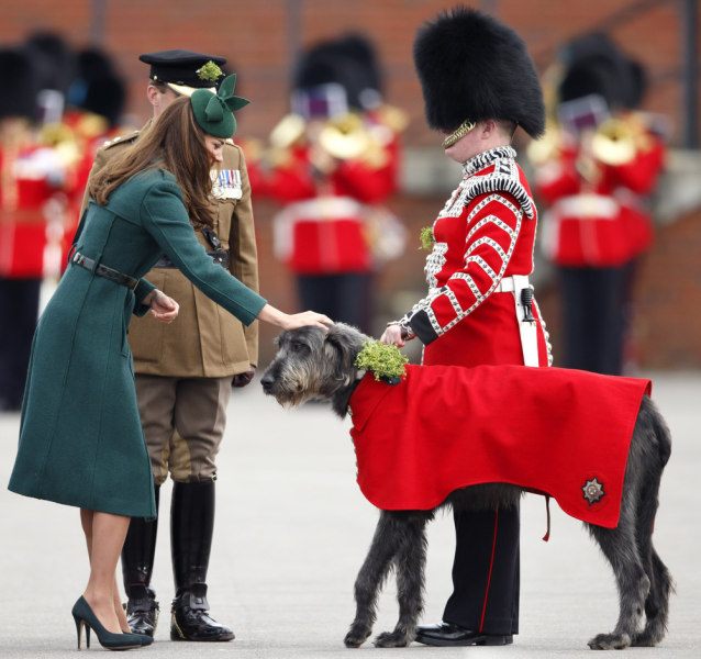 The Duchess of Cambridge presents a shamrock to Domhnall, the Irish wolfhound regimental mascot.