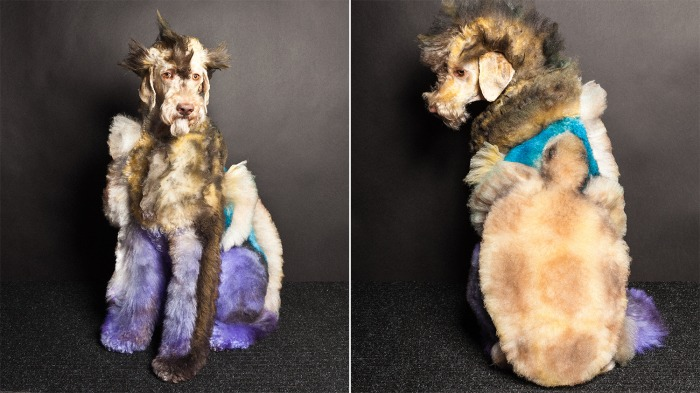Creative groomed dog.