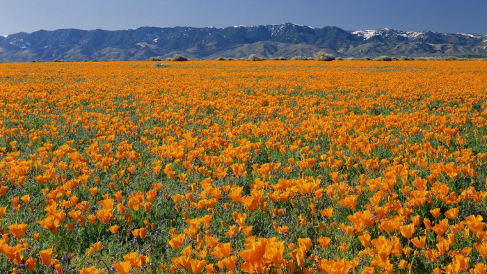 Image: Antelope Valley