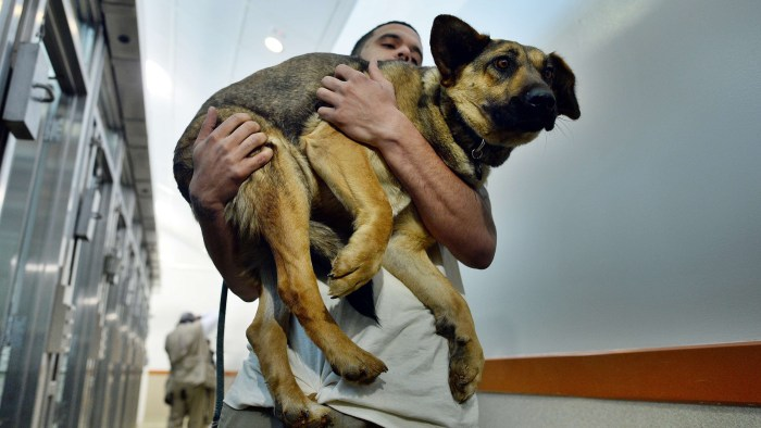 Washington Animal Rescue League Shift Supervisor Miles Gray carries a stray dog rescued from Sochi to its den at the league's shelter.