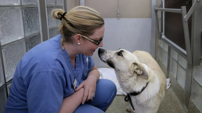 Washington Animal Rescue League Intake Director Maureen Sosa visits with a stray dog from Sochi, Russia, inside its 'doggie den' at the league's shelter on Thursday. The league partnered with Humane Society International to bring 10 rescued dogs from Sochi.