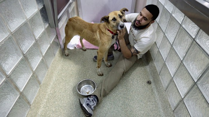 Washington Animal Rescue League Shift Supervisor Miles Gray pets a stray dog from Sochi at the league's shelter on Thursday.
