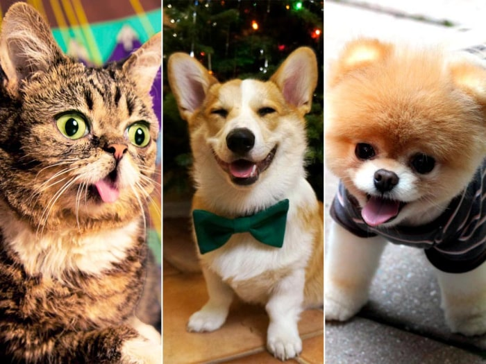 Pets We Wish We Owned