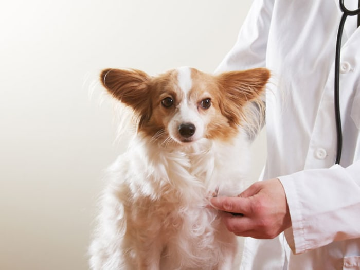 things your vet wishes you knew
