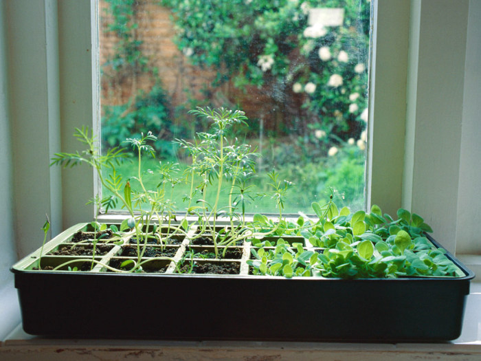 How to grow an indoor herb garden - Best herbs to grow indoors ...