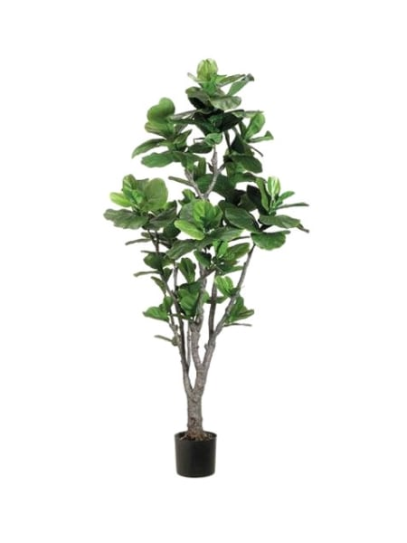 House plant definition what is - Tall house plants ...