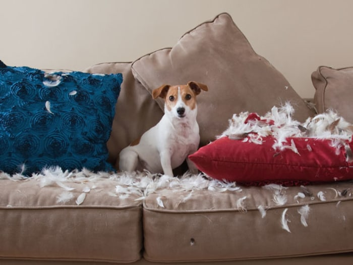 Tips to stop pets from destroying your nice stuff todaycom for Dog room furniture