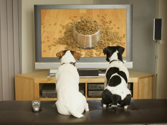 Shows We'd Like to See on Dog TV