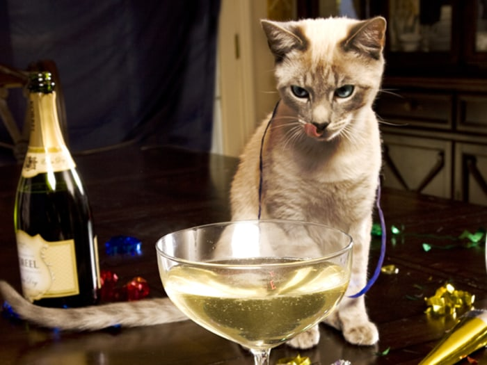 Now You And Your Cat Can Drink Wine Together