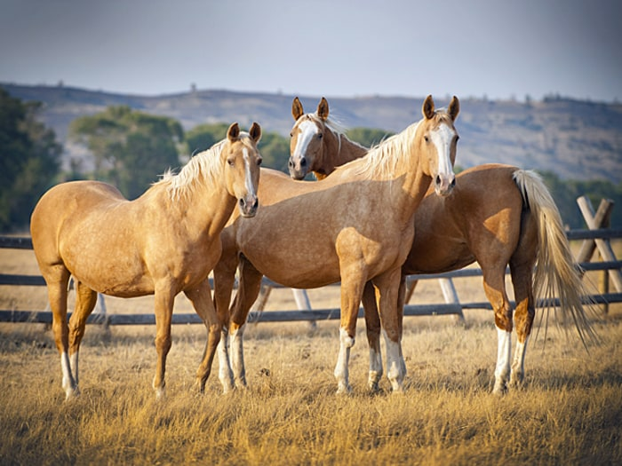 Horse Meat: The Other Red Meat