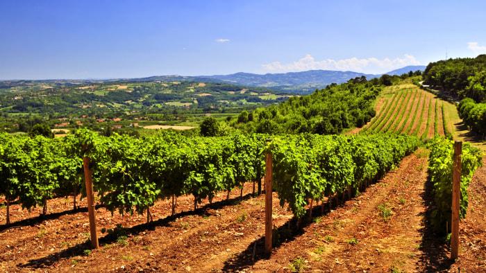 Bargain wine regions in Europe