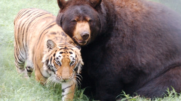 The founder of the Noah's Ark Animal Rehabilitation Center in Georgia believes the 'BLT' can teach humans a lesson about friendship.