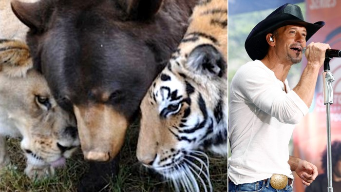 A lion, tiger and bear become best friends at animal sanctuary, and Tim McGraw performs on the plaza.