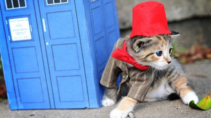 "Wendy McKee dressed a kitten in a costume inspired by ""Doctor Who,"" one of her favorite shows."