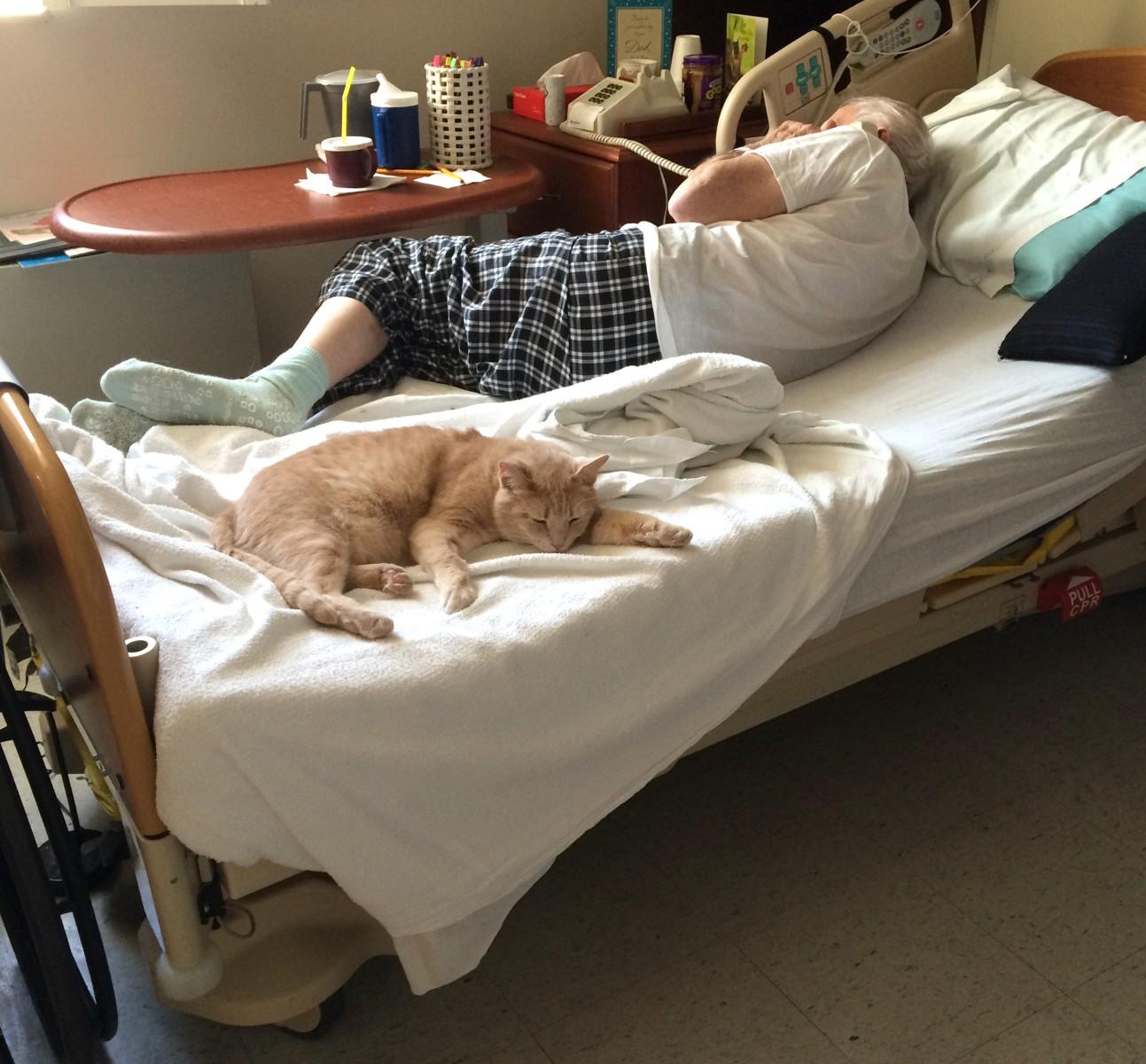 Cat Comforts Ailing Veterans