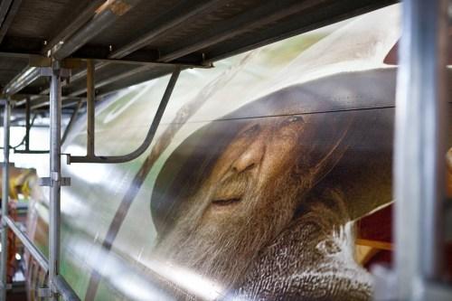 Image: Hobbit-themed plane