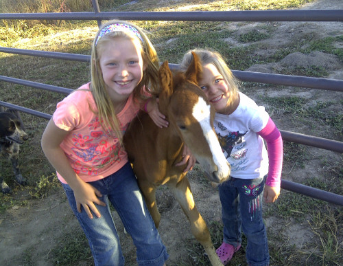 Jazz, a wild horse adopted by a family after a Bureau of Land Management roundup.