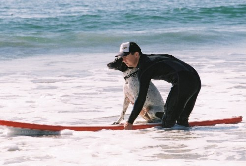 strange hotel jobs, dog surfing instructor