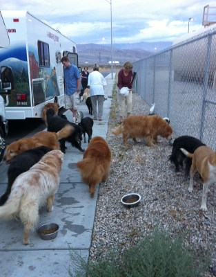 Image: Feeding time for dogs on the road trip.