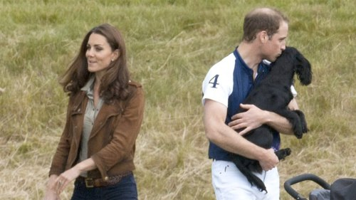 Kate and Will, pictured with their dog Lupo at a polo match, have helped the pup adjust to life with a new baby.